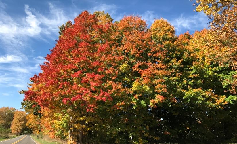 Fall photo 3